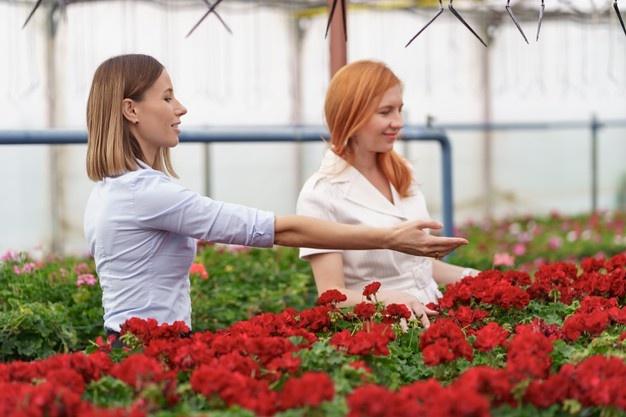 gmbh kaufen ohne stammkapital FORATIS bedingungen Angebote zum Firmenkauf gmbh mantel kaufen österreich preisvergleich